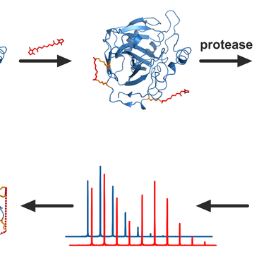 Protein Structure Characterization by Advanced Mass Spectrometry